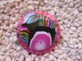Large fancy ring, multicolored cabochon fimo, on fuchsia resin