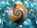 Cabochon ring, black / white / gold spiral, in Fimo